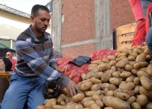 """ارتفاع أسعار البطاطس لـ12 جنيها في الفيوم.. و""""التجارية"""": ستنخفض قريبا"""