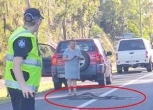 الرفق بالحيوان.. الشرطة الأسترالية توقف حركة السير من أجل ثعبان (فيديو)