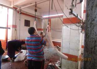 بالصور| سكرتير عام محافظة الغربية يتفقد المجازر