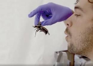 على غرار الروبوتات.. آلات للتحكم في الحشرات عن بعد
