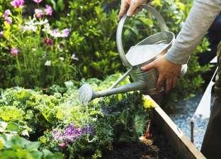 كيف تحمي نباتاتك من الموت خلال فصل الصيف