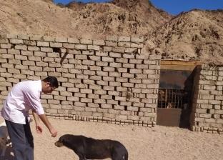 بالصور.. حصر كلاب مزرعة السيدة الإنجليزية بمدينة دهب
