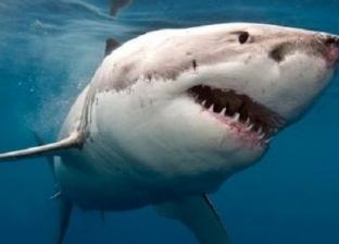 بالفيديو| اكتشاف سلالة نادرة من أسماك القرش أسفل بركان ثائر بغينيا