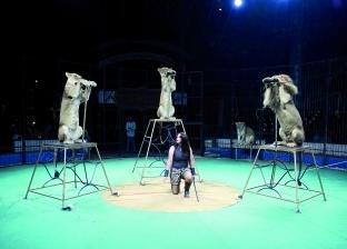 """باريس تمنع عروض الحيوانات البرية في السيرك وتصفه بـ""""القرار الأخلاقي"""""""