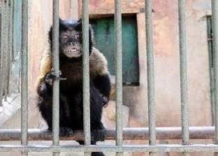 شركة أمن لحماية القرود