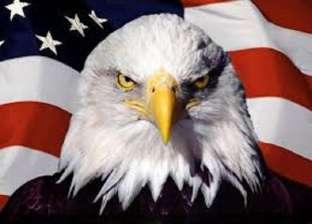"""السلطات الأمريكية تبحث عن قاتل """"طائر النسر"""" رمز الولايات المتحدة"""