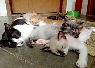 """متطوعون يقتحمون المنازل لإطعام الحيوانات الأليفة المهجورة في """"ووهان"""""""