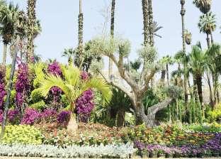مستثمرو نباتات الزينة يطالبون ببورصة وسوق دولية للبذور والشتلات
