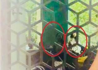 بالصور  أشباح مخيفة تظهر لامرأة خلال تصوير طفلتها في متحف بريطاني