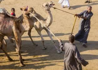 «العيد علقة».. مهندس يواجه تجاوزات الذبح بتوثيق فيديوهات «التعذيب»