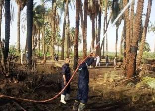 السيطرة على حريق في كمية من أشجار النخيل في سوهاج