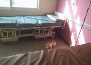 تداول صور لقطط بغرف مستشفى الفشن.. والمدير: المبيدات تستورد من الخارج
