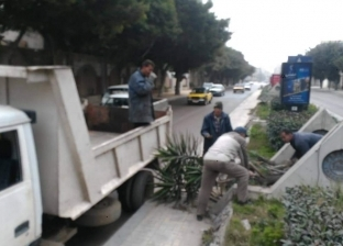 """""""وسط الإسكندرية"""" يرفع النباتات من الجزيرة الوسطى بشارع قناة السويس"""