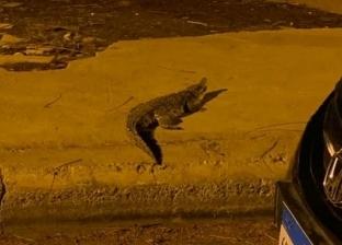 ظهور تمساح طوله متر في شوارع أكتوبر