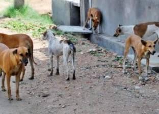 بالفيديو والصور| ربط 4 كلاب ببعضها البعض وحرقها حية في شبرا