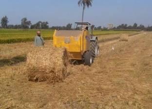 """""""شؤون البيئة"""": حرق قش الأرز انخفض وحصاد 60% من محصول كفر الشيخ"""