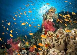 """""""جنة الله في الأرض"""".. """"البحر الأحمر"""" الـ3 عالميا كأفضل مكان للغطس متفوقة على """"المالديف"""""""