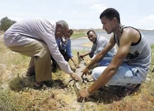 أسوانى يطلق سراح تمساح نيلى فى بحيرة ناصر: كنت بربيه فى البيت