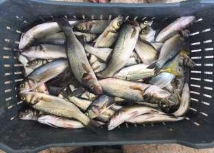 استقرار في أسعار الأسماك بعد عيد الأضحى.. والبلطي بـ19 جنيها