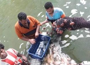 بدء طرح الإنتاج السمكي لمزارع وادي حوضين في أسواق القاهرة والغردقة