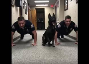 بالفيديو| كلب يمارس تمارين الضغط بمهارة