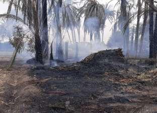 عاجل.. السيطرة على حريق بأرض زراعية في بني سويف