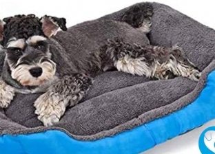 سرير لحماية الكلاب والقطط من نزلات البرد: بـ525 جنيه بس
