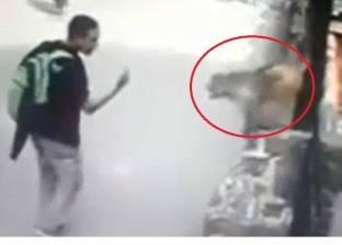 بالفيديو| قرد يهاجم المارة بشراسة في الهند
