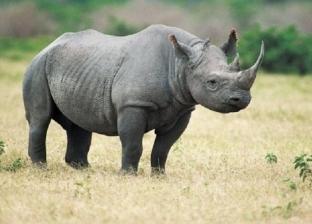 """""""حدائق الحيوان"""" تكشف حقيقة وصول سعر قرون """"زيزي"""" لـ 100 مليون دولار"""