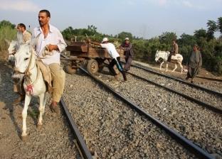 فزع حصان من صافرة قطار يسقط صاحبه جثة هامدة على مزلقان بالدقهلية