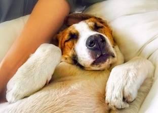 10 أسباب تجعلك تقبل على شراء كلب
