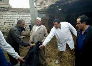 محافظ الدقهلية: تحصين 274 ألف رأس ماشية وأغنام ضد مرض الحمى القلاعية