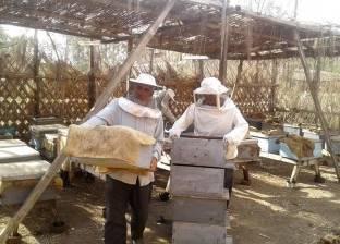 """""""الإرشاد الزراعي"""" بالمنزلة يبدأ موسم جني عسل النحل"""