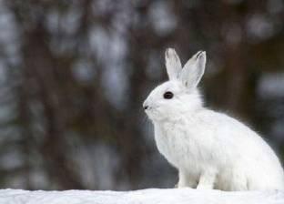 علماء: الاحتباس الحراري يغيّر لون الحيوانات!