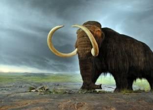 """علماء يكشفون سبب انقراض """"الماموث"""""""