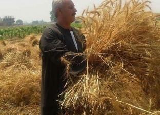 نقيب عام الفلاحين: نحتاج 6 ملايين فدان لتحقيق الاكتفاء الذاتي من القمح