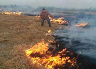 """""""البيئة"""": تجميع 4 آلاف طن قش أرز وتحرير 19 محضر مخالفة للمزارعين"""