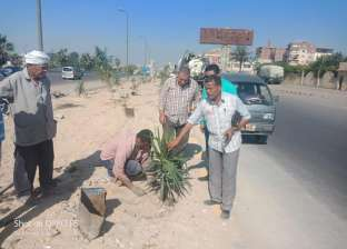 """""""العامرية أول"""": تجميل وزراعة أشجار على الطريق الصحراوي غرب الإسكندرية"""