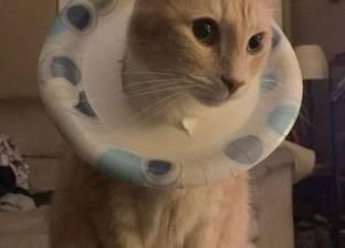 """بالصور  """"شقاوة قطط""""..هذا سلوك الحيوانات الأليفة وقت اللعب"""