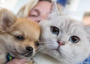 دراسة: الحيوانات الأليفة خير مساعد مع الأمراض العقلية