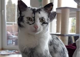 «رفرف القطة الثرثار».. ابتكار جهاز لفهم القطط الأليفة بـ48 ألف جنيه