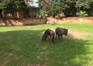 فتح حديقة حيوان الجيزة من اليوم أمام الزائرين