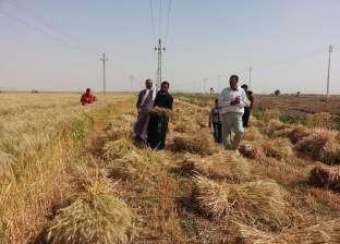 """وكيل """"زراعة الوادي الجديد"""": بدء حصاد القمح بعدة مناطق بالمحافظة"""
