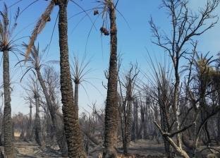 """السيطرة على حريق شب بنخيل في قرية """"سلوا"""" بأسوان"""