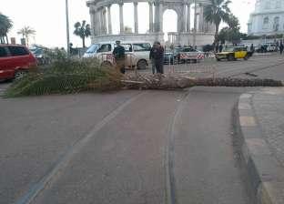 """سقوط نخلة أمام النصب التذكاري لـ""""الجندي المجهول"""" بالإسكندرية"""
