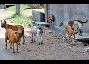 تأجيل دعوى تطالب بوقف قتل كلاب وقطط الشوارع وتصدير لحومها لـ16 مارس