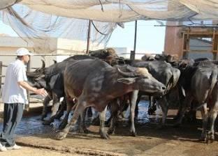بريد الوطن  من المسئول عن تهديد الثروة الحيوانية فى مصر؟