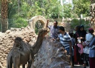 50 ألف زائر لحديقة الحيوان في ثاني أيام عيد الأضحى