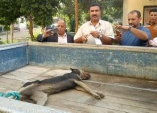 القضاء على 20 كلبا ضالا في حملة بمنطقة عقر طلاب مدرسة بالخانكة