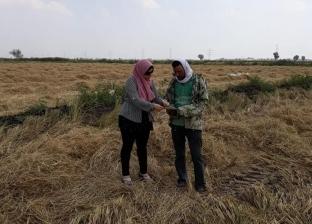 شؤون البيئة: تحرير 138 محضرا وحصاد 83% من محصول كفر الشيخ